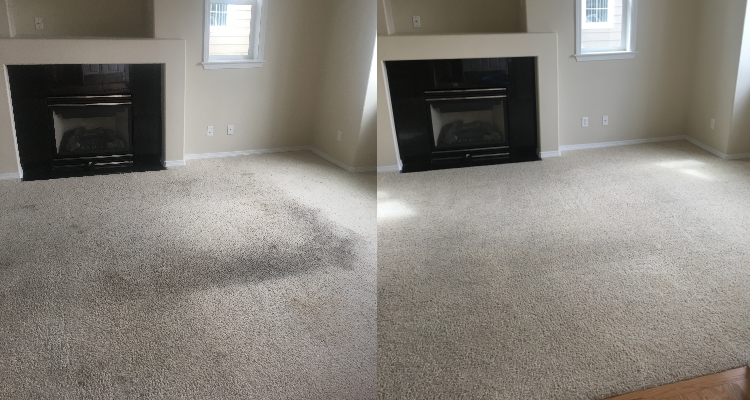 Rental Carpet Recovery