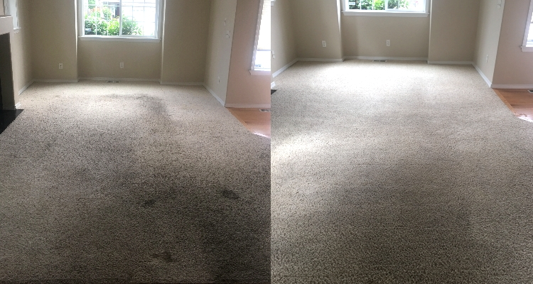 Rental Carpet Recovery Continued
